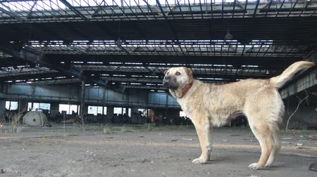 Abandoned stray dog in Ruin factory
