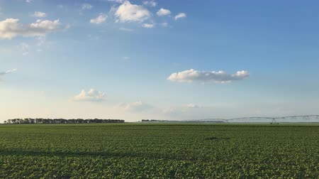 соя : Soybean field with irrigation sprinklers