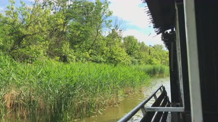 girandola : Pov Cruise In Swamp Lake Green