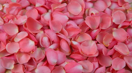 valentine : pink rose petals on wooden table hd footage