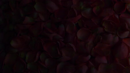 углы : rose petals hd footage