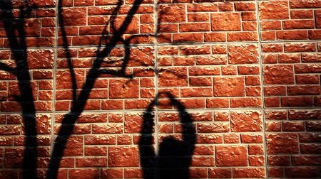 loutka : red wall tree shadow hands hd footage