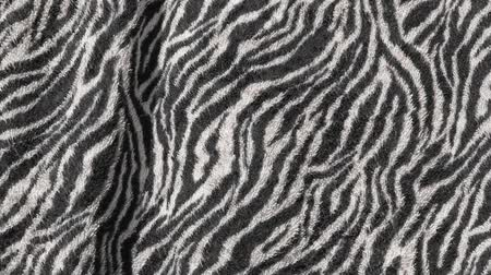 seu : zebra print background  hd footage