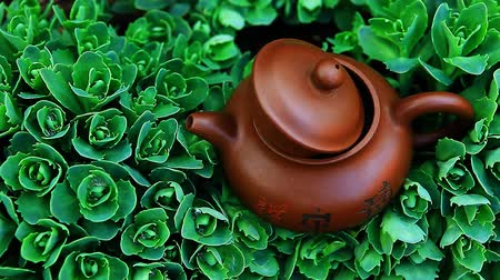 nedvdús : Chinese hot teapot on  succulent plant  hd footage