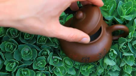 vintage pozadí : Chinese hot teapot on  succulent plant  hd footage