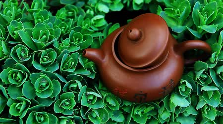 ceramika : Chinese hot teapot on  succulent plant  hd footage