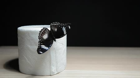 motyl : butterfly toilet paper dark background hd footage