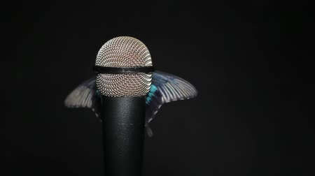 певец : butterfly insect microphone dark background hd footage