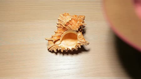 оболочка : hat seashell hand wooden table hd footage