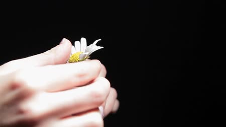 superstition : camomile flower woman hand black background hd footage