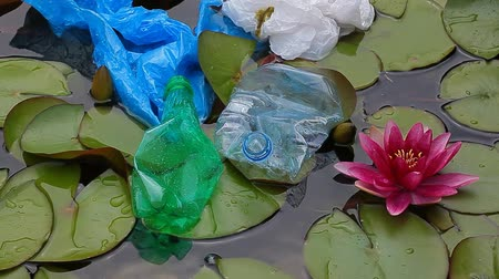 voluntário : plastic bottle lake water lily hd footage