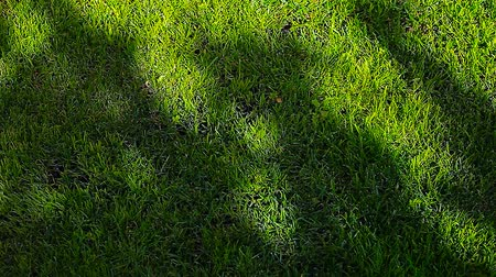 desenvolvimento : green grass tree shadow hd footage nobody