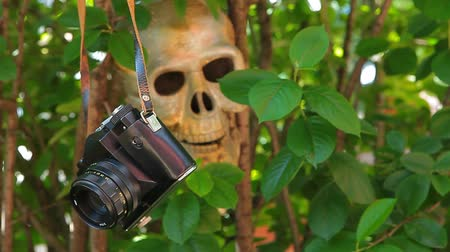 dead wood : old camera skull tree background nobody hd footage