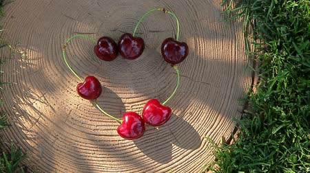 koçan : cherry berry heart symbol stub nobody tree shadow hd footage