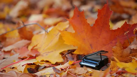 gyógyult : piano autumn forest maple leaf background Stock mozgókép