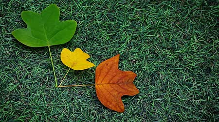 all ages : autumn leaf green grass background hd footage Stock Footage