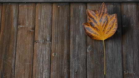 enferrujado : autumn leaf wooden desk background Stock Footage