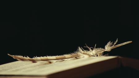 edebi : book feather wind dark background hd footage