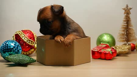 гриф : puppy box new year toy white background hd footage