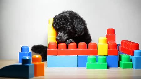 puppy portrait toy table background hd footage