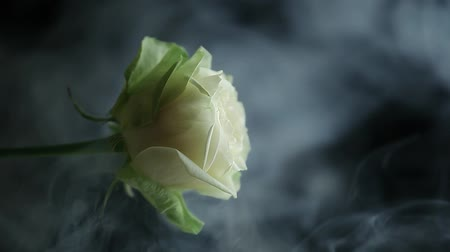 bad ecology : rose flower smoke dark background hd footage Stock Footage