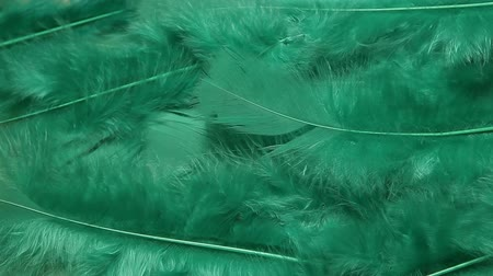 evrensel : green soft bird feather background Stok Video