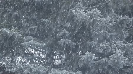 snow wind fir tree background hd footage