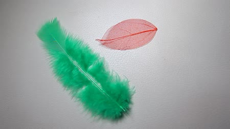 bird feather dried leaf leather background