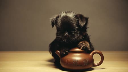 black puppy teapot wooden table hd footage