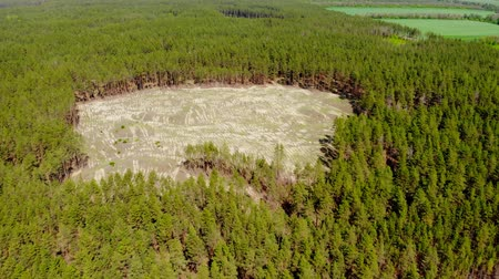 Aerial drone view of big empty hollow inside coniferous pine forest due to illegal deforestation. Climate change disaster danger. Earth resources enormous usage Vídeos
