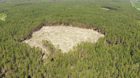 desolado : Aerial drone view of big empty hollow inside coniferous pine forest due to illegal deforestation. Climate change disaster danger. Earth resources enormous usage Stock Footage