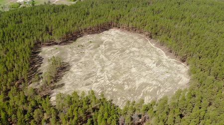 salva vidas : Aerial drone view of big empty hollow inside coniferous pine forest due to illegal deforestation. Climate change disaster danger. Earth resources enormous usage Vídeos