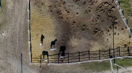 パドック : Group of thoroughbred horses walking and grazing in paddock near stable. Long evening afternoon shadow. Beautiful animals at farm or ranch. Aerial top view from drone
