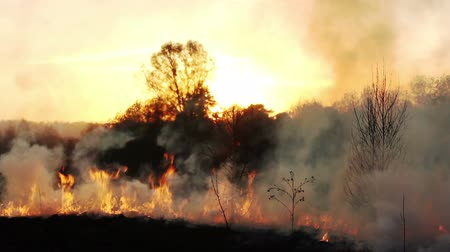 jungle : wildfire Stock Footage