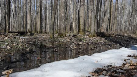 thaw : Early spring landscape of the in the forest. The camera moves from right to left. Stock Footage