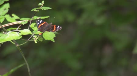 folga : Butterfly flying off a branch Stock Footage