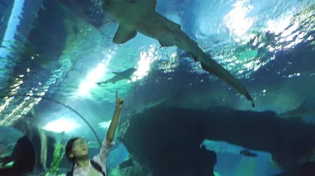 hammerhead shark : Cute Asian Thai girl is pointing a Bluegray Carpetshark with excitement in her field trip underwater tunnel of an aquarium in HD quality video