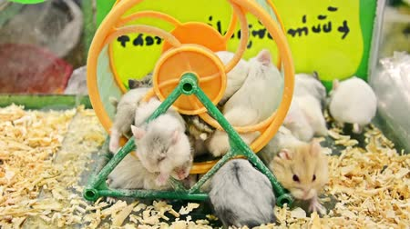 hay pile : Many cute little furry baby hamsters piling up and stuck in the running wheel in the cage in HD