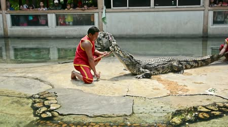 тыкать : SAMUPRAKARN, THAILAND - MARCH 30, 2015: Professional trainers perform risky stunt show with big fresh water crocodile in Thailand in March 30, 2015