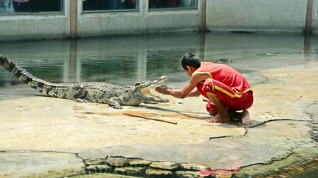 valiant : SAMUPRAKARN, THAILAND - MARCH 30, 2015: Professional trainers perform risky stunt show with big fresh water crocodile and nearly got his hand bitten off in Thailand in March 30, 2015 Stock Footage