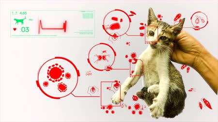 vacina : Animation of germ pathogen analysis from animal and pet cat gifographic in white background for health or biology education. Hand holding a cat with virus, bacteria, fungus, parasites germ in pathology and health care concept 4k