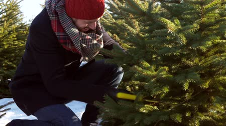 squat : Man cutting a perfect christmas tree Stock Footage