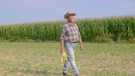 zkoumat : Senior farmer with corn cobs walking across the field