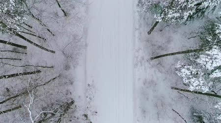 woodland : Aerial view of a car on a beautiful winter scenery
