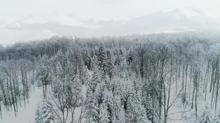 mírumilovnost : Drone view of forest in winter scenery Dostupné videozáznamy