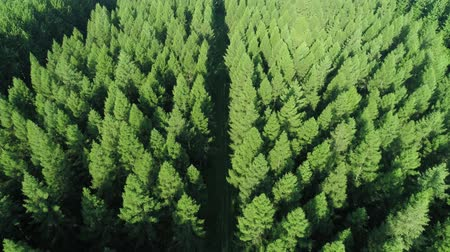 doğa arka plan : Aerial view of forest in springtime Stok Video