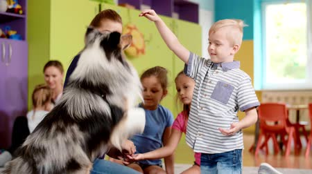 guarigione : Children playing with dog during therapy in the preschool Filmati Stock