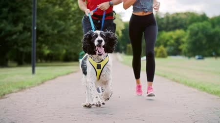 Close up of dog and couples legs during running,