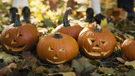 anão : Pumpkins for Halloween in autumn forest