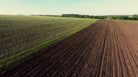 Flight over an agricultural field with young green plants. Spring season, May. Ukraine. Europe.